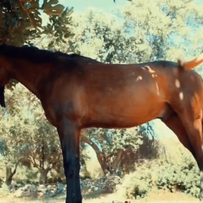 excursion equestre